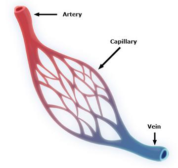 Capillary_system_cert